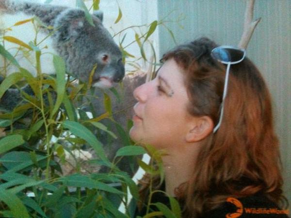 jENY_JDroadtrip_Koala