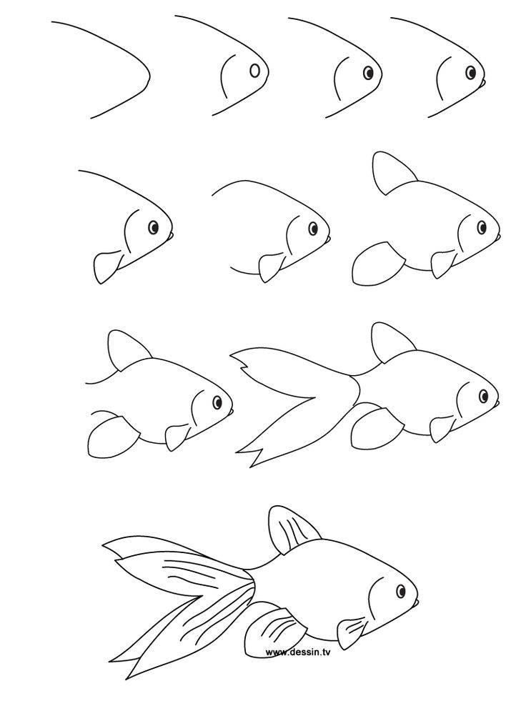 Carnet de voyage illustrations for Fish scenery drawing